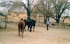 Laura Jones between house and barn